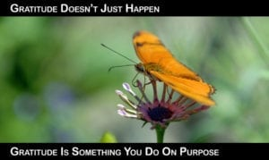 Gratitude-on-Purpose